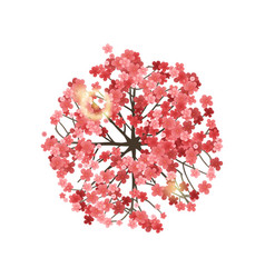 spring tree top view vector image