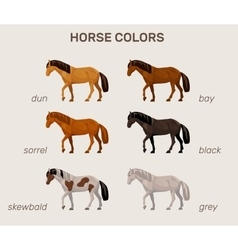 infographic with main horse colors vector image
