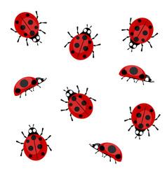 ladybugs on a white background vector image