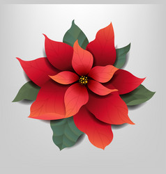 red poinsettia isolated grey background vector image