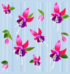 flower fuchsia vector image vector image