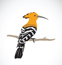 Hoopoe on white background Eurasian hoopoe Upupa e vector