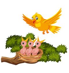mother bird feeding chicks vector image