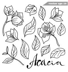Simple hand drawn acacia flowers set vector