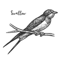 sketch swallow bird or martins martlet vector image