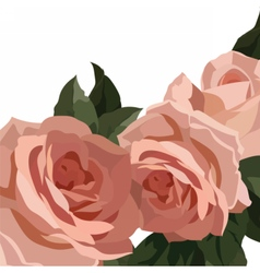 Vintage Watercolor Roses Flowers vector