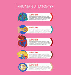 human anatomy medical poster with internal organs vector image