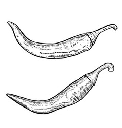 chili peppers in engraving style design element vector image