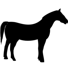 black farming horse silhouette vector image