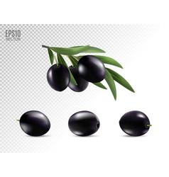 black olives set isolated photo-realistic vector image