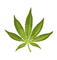 Marijuana leaf color realistic vector