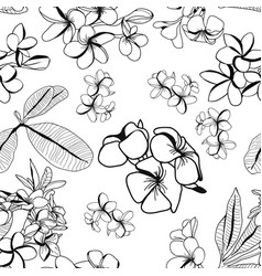 pattern decorative plumeria flower and leaves vector image