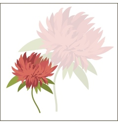 Postcard with flower Astra for your design vector