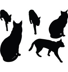 Wild cat - vector