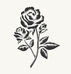 black hand drawn roses engraving vector image vector image