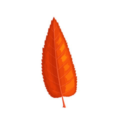 fallen mountain ash red tree leaf icon vector image