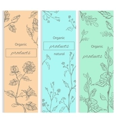Floral flowering decorative flyer vector image