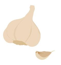 Garlic clove vector image vector image