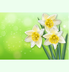 narcissus spring flowers realistic vector image