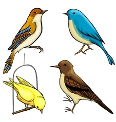 Pack of four cartoon birds vector