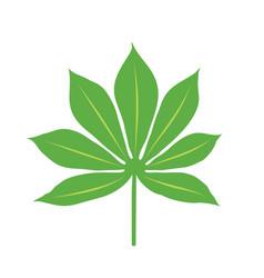 Cassava plant leaf on white background vector