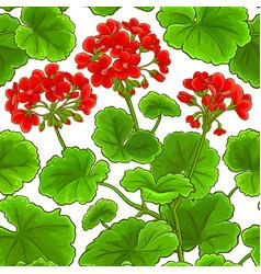 geranium plant pattern on white background vector image