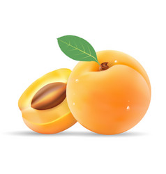 Group of ripe sliced apricot with leaves isolated vector