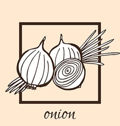Hand drawn onion vector