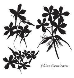 Set flowers phlox divaricata with leafs black vector