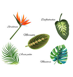 Tropical collection of single exotic plants vector