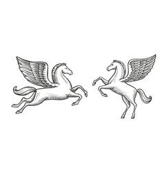 winged horse sketch pegasus vintage symbol vector image