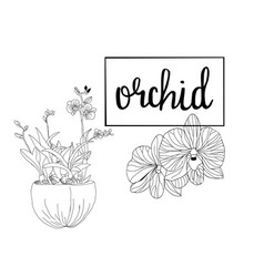 Hand drawn sketch orchid flowers in graphic style vector