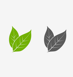 tea leaves icon set green and gray isolated vector image vector image