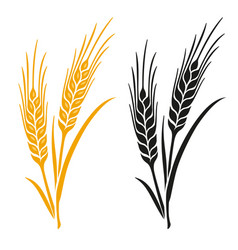 Ears of wheat barley or rye vector