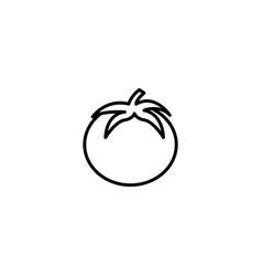 fresh tomato icon vector image