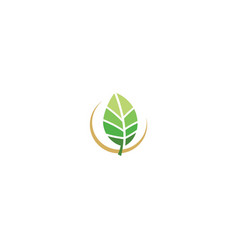 green leaf organic eco nature logo vector image