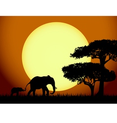 Elephants at sunset vector image vector image
