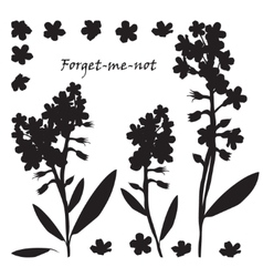 Set of bouquet beautiful forget-me-not flowers vector image vector image