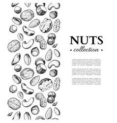 nuts vintage frame hand drawn vector image