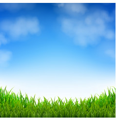 blue sky and grass vector image