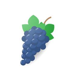 Fresh juicy grape icon tasty ripe fruit isolated vector