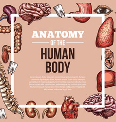 Human organs sketch body anatomy poster vector