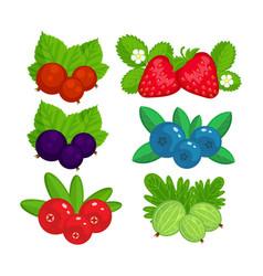 set of garden berries isolated vector image