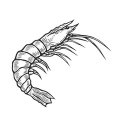 shrimp hand drawn vector image