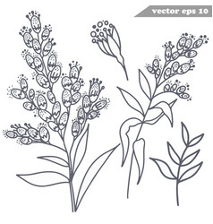 simple hand drawn mimosa flowers set vector image