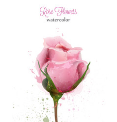 Watercolor pink rose isolated card wedding vector