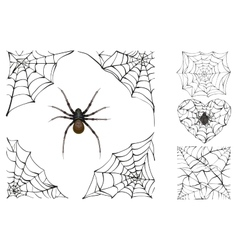 Web and poisonous spider Set Halloween accessory vector image