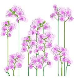 purple orchids tile vector image