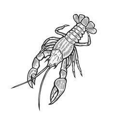 hand drawn marine lobster vector image vector image