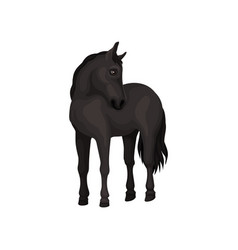 beautiful black horse standing isolated on white vector image